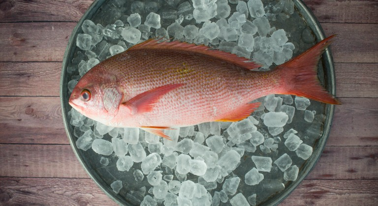 healthy_eating049_red_snapper