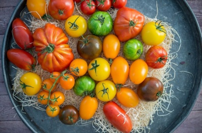 Heritage Tomatoes from the Elements by Elior Range